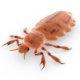 head-louse